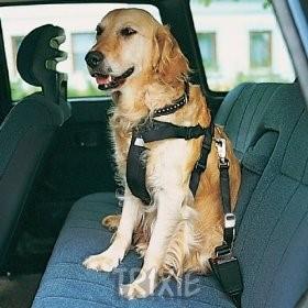 cestovanie so psom