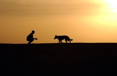 Poruchy správania psov a mačiek – problémy, ktoré sa dajú riešiť