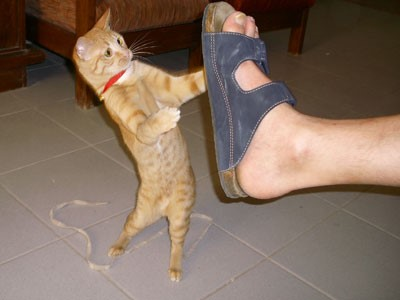 mladá divoká mačička