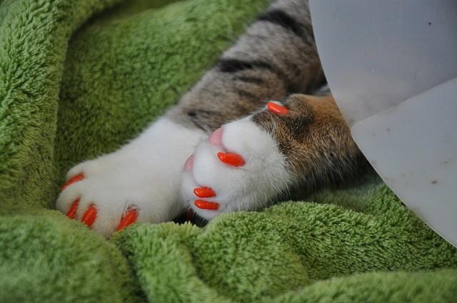 mačka Zoznamovacie služby