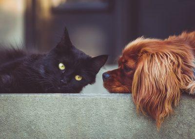 Pes a mačka