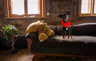Deštruktívne správanie psov a mačiek