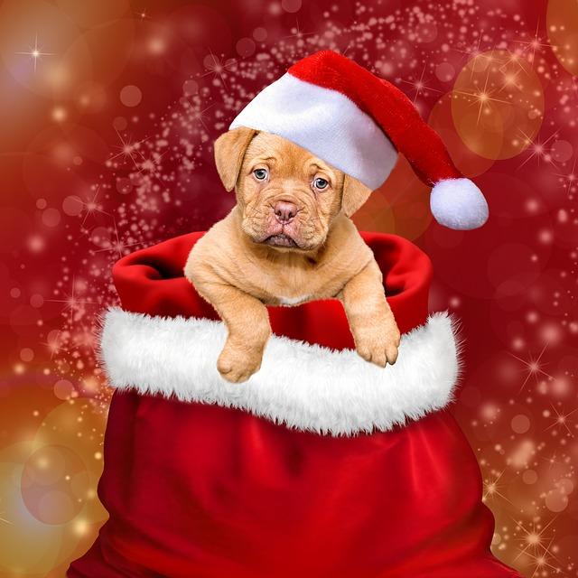 pes-vianoce