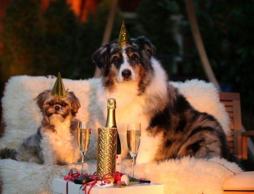 Silvester a strach zvierat zo zábavnej pyrotechniky