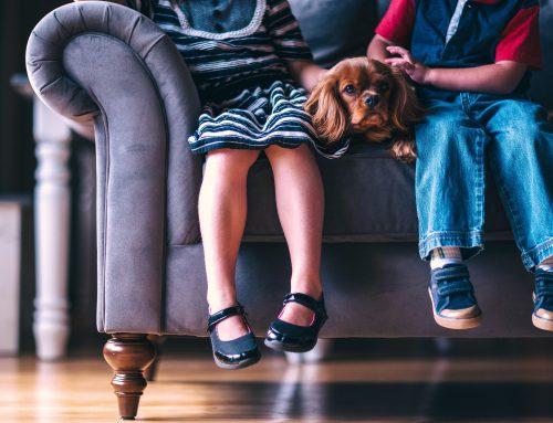 Riziká pri kontakte psov s deťmi a ich prevencia