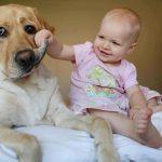 Príklady nevhodného a nebezpečného spôsobu komunikácie dieťaťa so psom