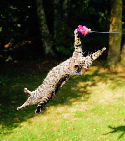 Agresivita mačiek voči majiteľom