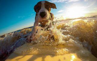 Tipy ako zabrániť prehriatiu psa