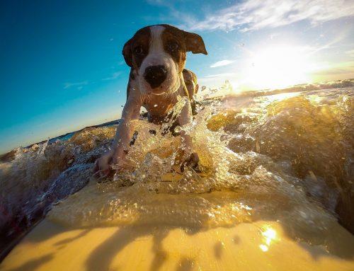 15 zásad, ktoré pomôžu predísť prehriatiu psa