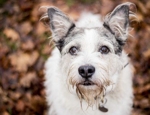 Kotercový kašeľ – ako psíkov chrániť prírodnou cestou?
